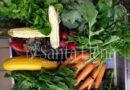 Como un refuerzo a la seguridad alimentaria y la apropiación, concluyó Agro, Saberes e Identidad